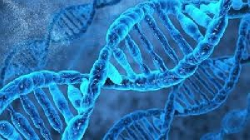 پاورپوینت گونه زایی ژنتیكی